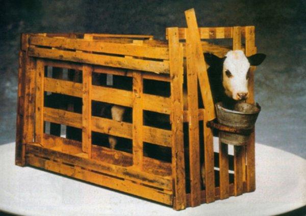 caisse pour veau de lait