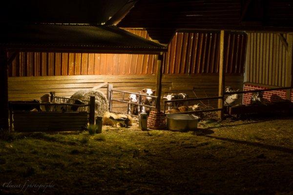un soir a la ferme