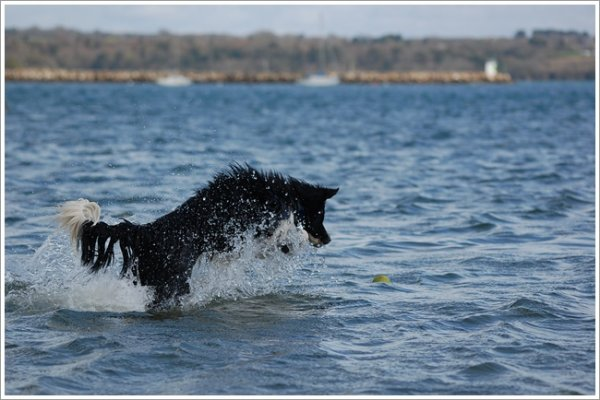 Comme un poisson dans l'eau !