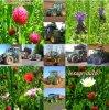 Yohanrolland-Lesagridu16 Bonne Visite Sur Mon Blog !!!!!!