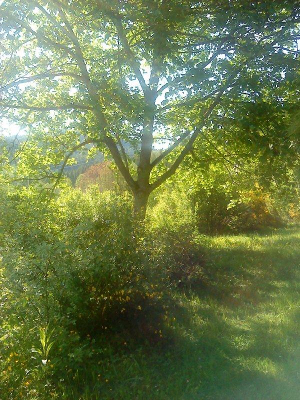 Pentecôte 2012 en vert sous soleil radieux