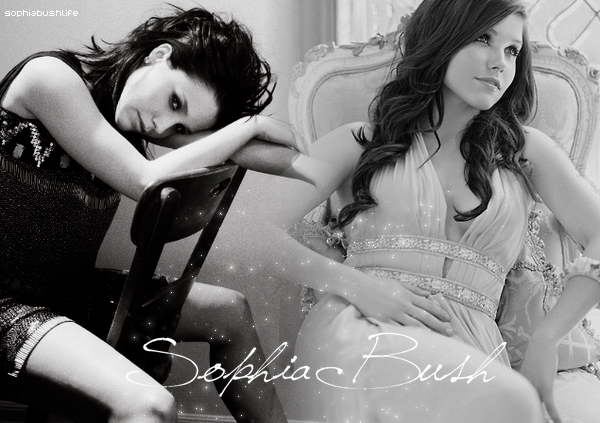 Welcome on Sophiabushlife