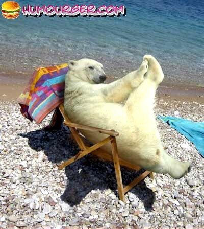 Un ours en vacances