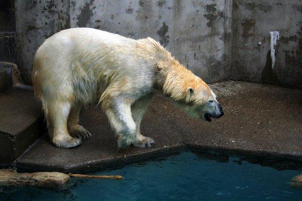 Un ours au bord de l'eau