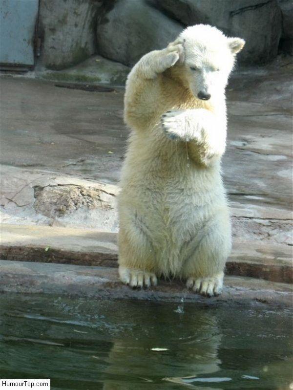 Un ours au garde-a-vous^^