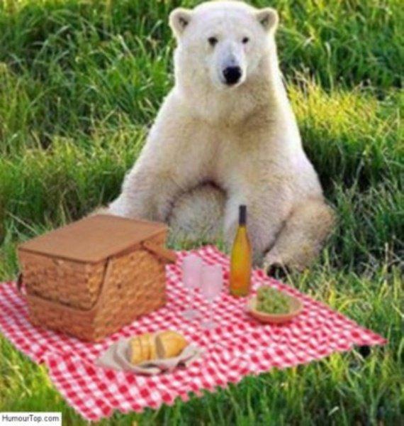 Un ours qui pique-nique 8-p