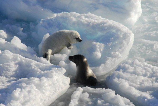 Un jeune ours rencontre un phoque^^
