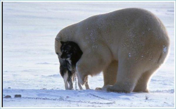 Avec son ami le chien^^