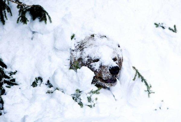 Camouflage d'un ours brun^^