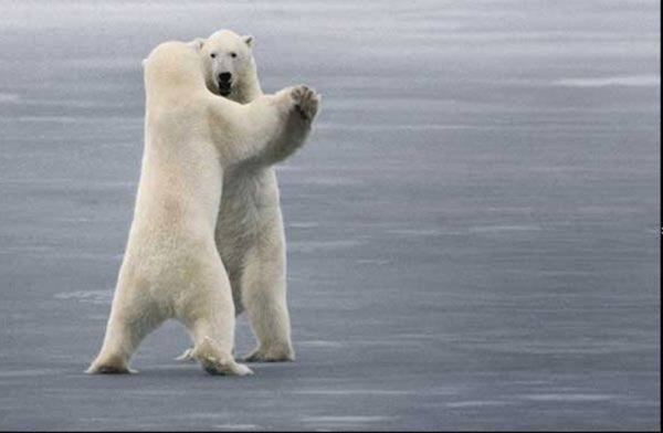 Des ours qui dansent^^