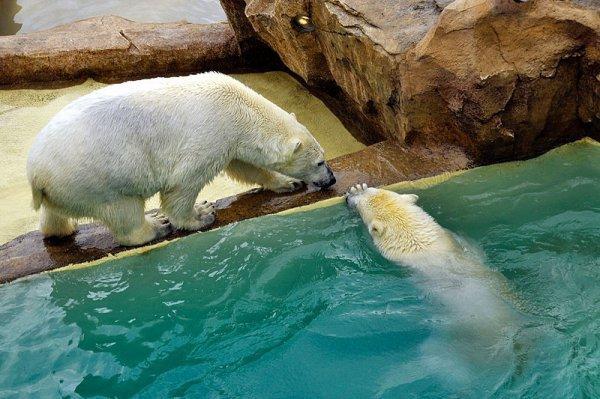 Deux ours en couple