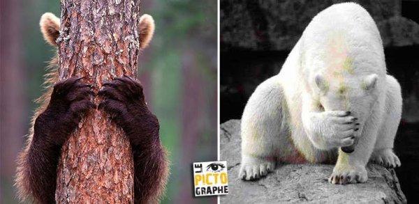 Deux ours qui ne veulent pas voir:o