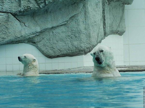 Deux ours qui se baignent en couple^^