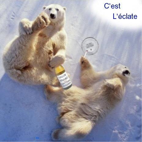 Deux ours qui se font la fête^^