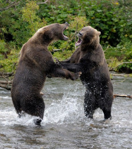 Deux ours très expressif^^