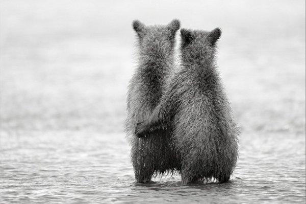Deux oursons amoureux^^