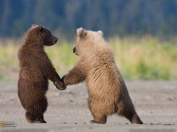 Deux oursons patte dans la patte^^
