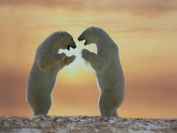 Duel de l'amour^^