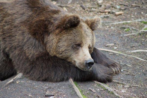 Grizzli nounours^^