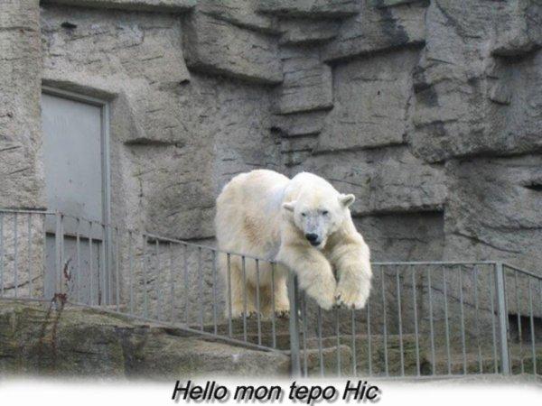Hello Hic^^