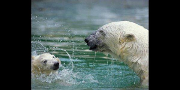 Un couple qui se baignent^^