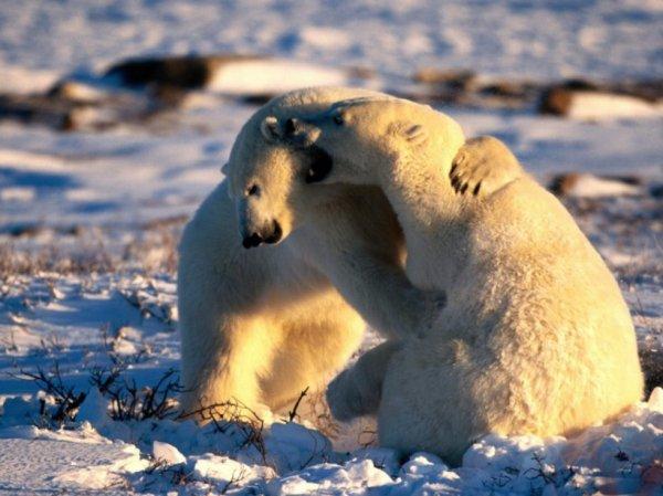 Très tendrement ours^^