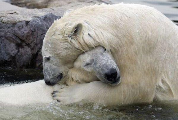 Un ours amoureux 8-p