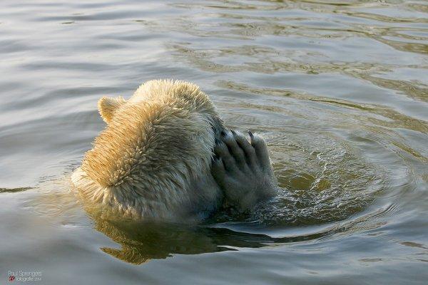 Et moi, je me baigne^^