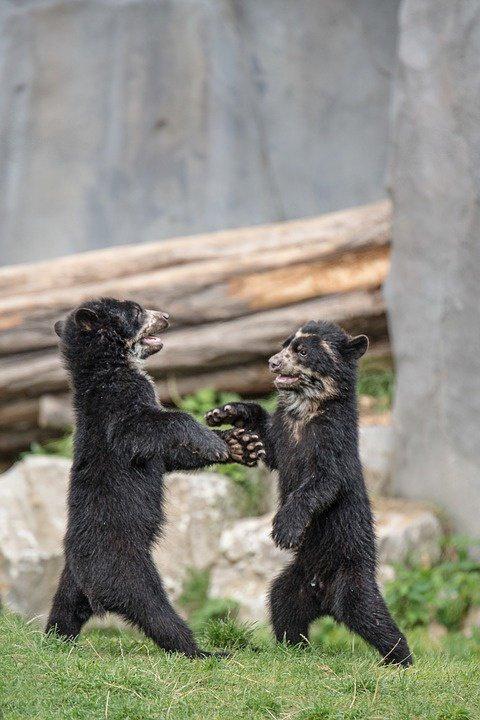 De braves oursons qui jouent^^