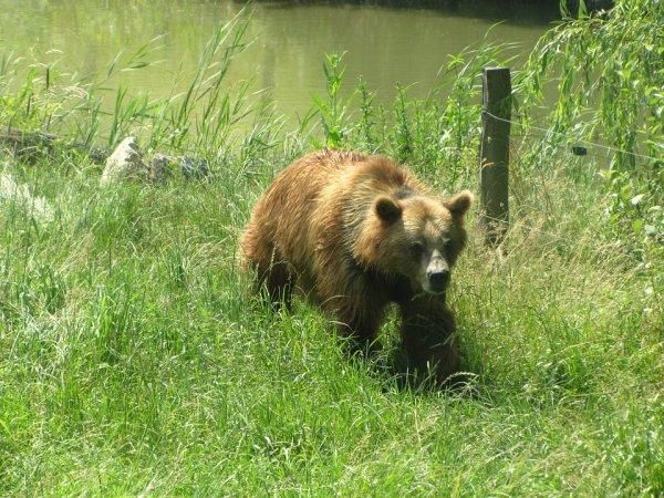 Le gentil ours dans la prairie^^