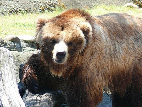 Nous avons un ours politiciens^^