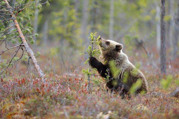 Un jeune ours^^