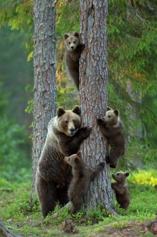 Une bien brave famille^^