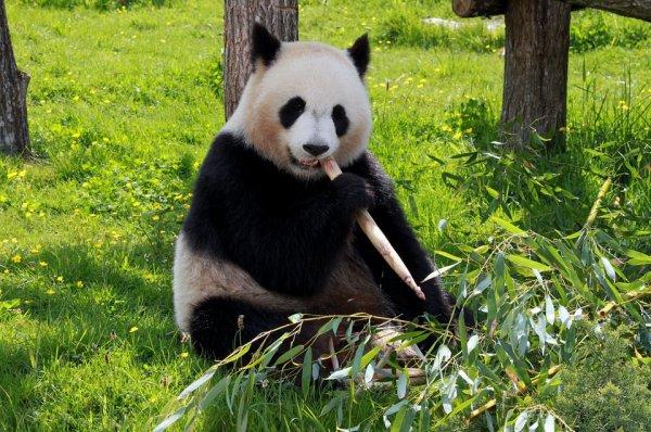 J'adore particulièrement ce bambou là^^