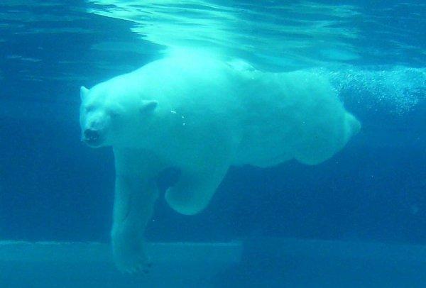 J'adore le sous l'eau^^