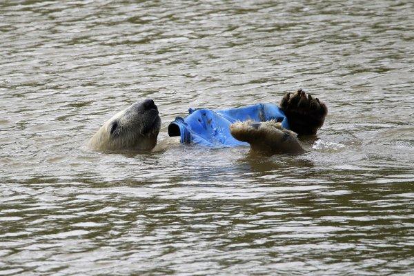 L'humain et sa pollution:o
