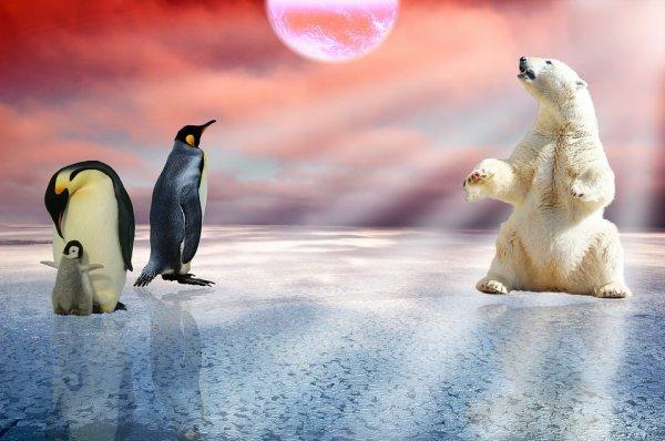 Nous faisons parfois amis avec les pingouins^^