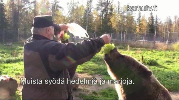 Les ours raffolent du raisin 8-p