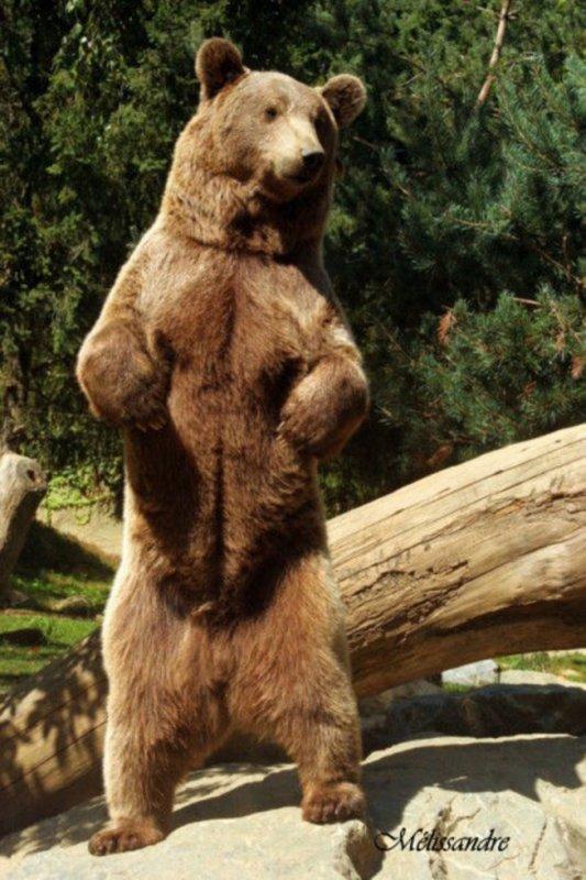 Je compati pour les ours défavorisés!:o