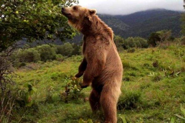 Charlatan de commerçant de chine: Relâchez cet ours sinon, je vous démoli!:o