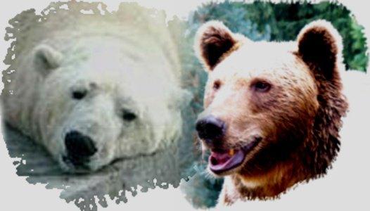 Nous soutenons les ours défavorisés tel est notre mission!