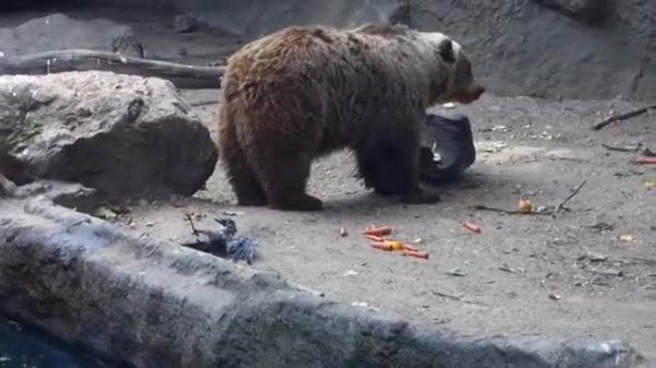 Cet ours sauve un oiseau de la noyade