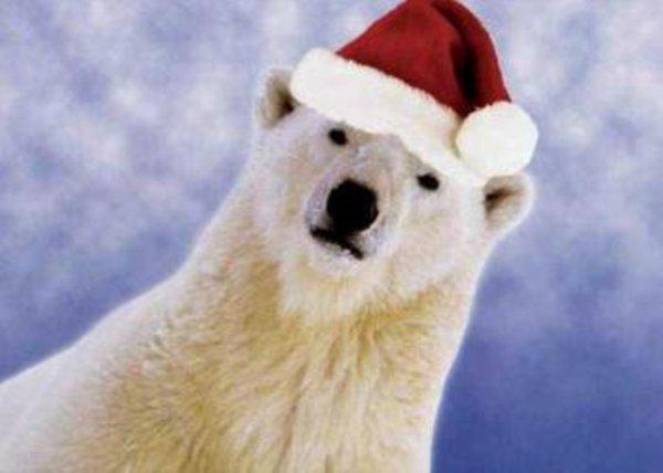 En vérité, le père Noël est un ours^^