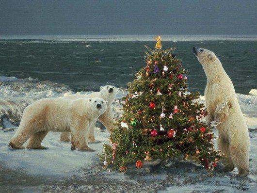 Nous avons également fait le réveillon de Noël^^