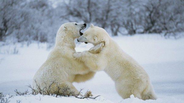 Je suis le plus heureux des ours de t'avoir rencontrer!^^