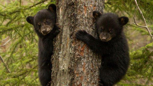Une saison chez les ours^^