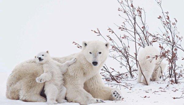 Des ours en famille^^