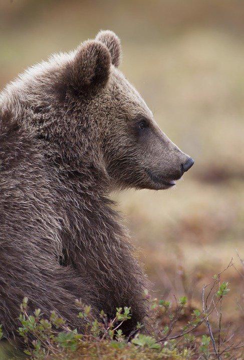 Un charmant jeune ours!^^