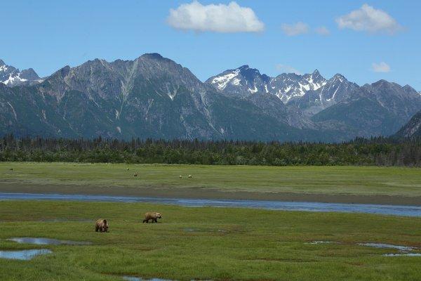 """Un si joli paysage """"surtout avec les ours""""^^"""