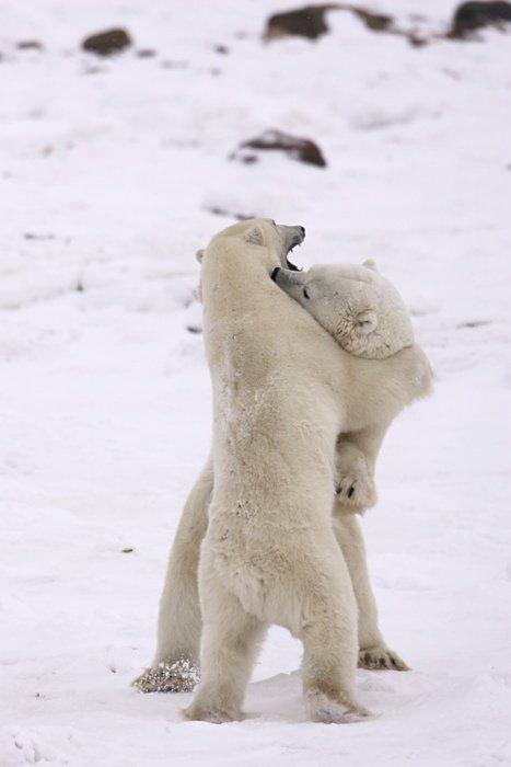 Dansons ensembles ma chérie adorée!^^